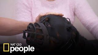 Rozwścieczony Rottweiler nie dawał się zbadać! [Doktor Miller i jego zwierzęta]