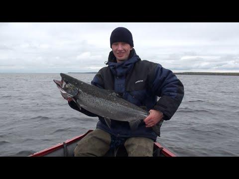 ловля онежского лосося троллингом