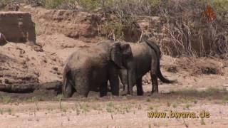 Namibia erleben / Teil 5 - Wüstenelefanten im Hoanib Rivier.
