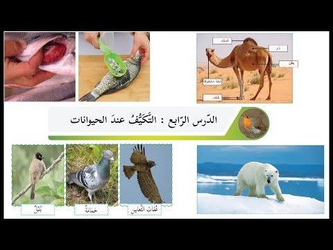 درس التكيف عند الحيوانات حل التدريبات الصف الثالث العلوم الدرس الرابع Youtube