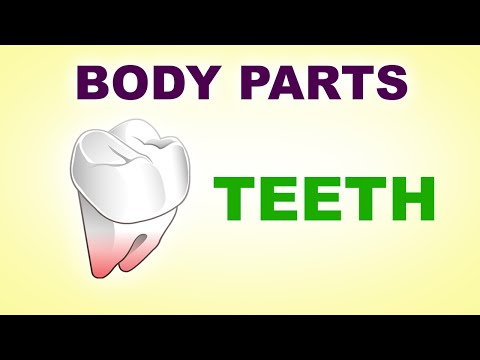 Teeth - Human Body Parts -  Pre School Know Your Body - Animated Videos For Kids