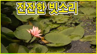 비오는소리 - 연못에 떨어지는 빗소리 -수련꽃 비오는풍경