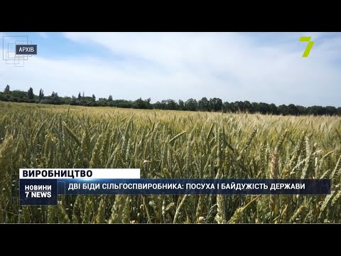Новости 7 канал Одесса: Дві біди сільгоспвиробника: посуха і байдужість держави