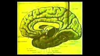 Головной мозг (учебный фильм СССР)