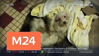 """""""Московский патруль"""": в Зеленограде мужчина запер дома собак и кошек - Москва 24"""