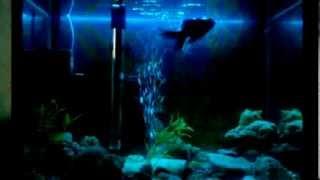 подсветка для аквариума  своими руками(Освещение аквариума -- проблема, с которой сталкивается каждый обладатель домашнего подводного царства...., 2014-03-13T16:00:19.000Z)
