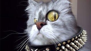 Кошка сердится на птичку,не на шутку !!!