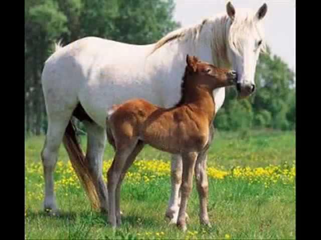 Pferdebilder.wmv