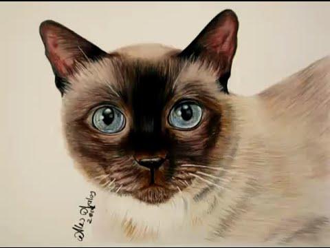 Cómo dibujar pelo de animal (Gato) / How to draw a kitten