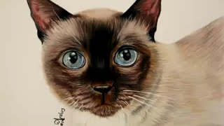 Cómo dibujar pelo de animal (Gato) / How to draw a kitten