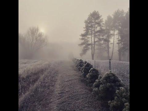 Живая изгородь из сосны. Где взять саженцы