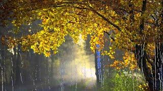 Дождик осенний, поплачь обо мне