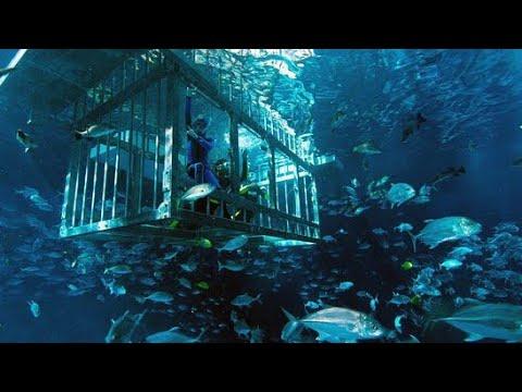 Dubai Aquarium | Dancing Fountain | Burj Khalifa |Dubai Mall