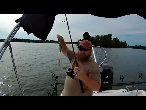 How To Catch White Perch For Catfish Bait! Santee Cooper.