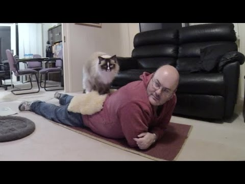 Ragdoll Cat Massages Human - PoathTV Funny Cat Video - PoathCats