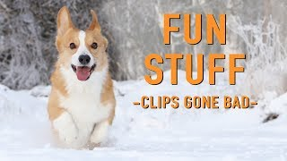 BLOOPERS COMPILATION - Topi the Corgi