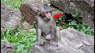 OMG! What little monkey whistle or crying?