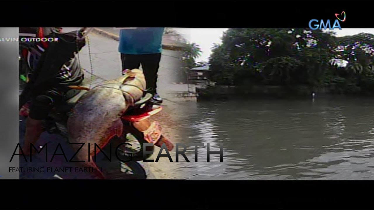 Amazing Earth: Is the Pasig River safe for aquatic life?