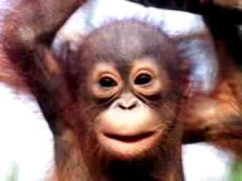 Selamat Ulang Tahun Ala Monyet, Happy Birthday To You Video Gokil Dan Lucu