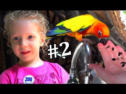 Сафари парк  #2 Кормим рыбок живые крокодилы и младенцы попугайчики