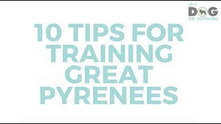 10 Tips for Training Great Pyrenees
