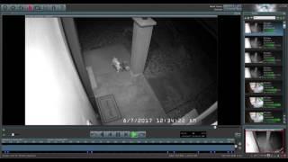 Cat vs Coyote Caught On Surveillance Camera