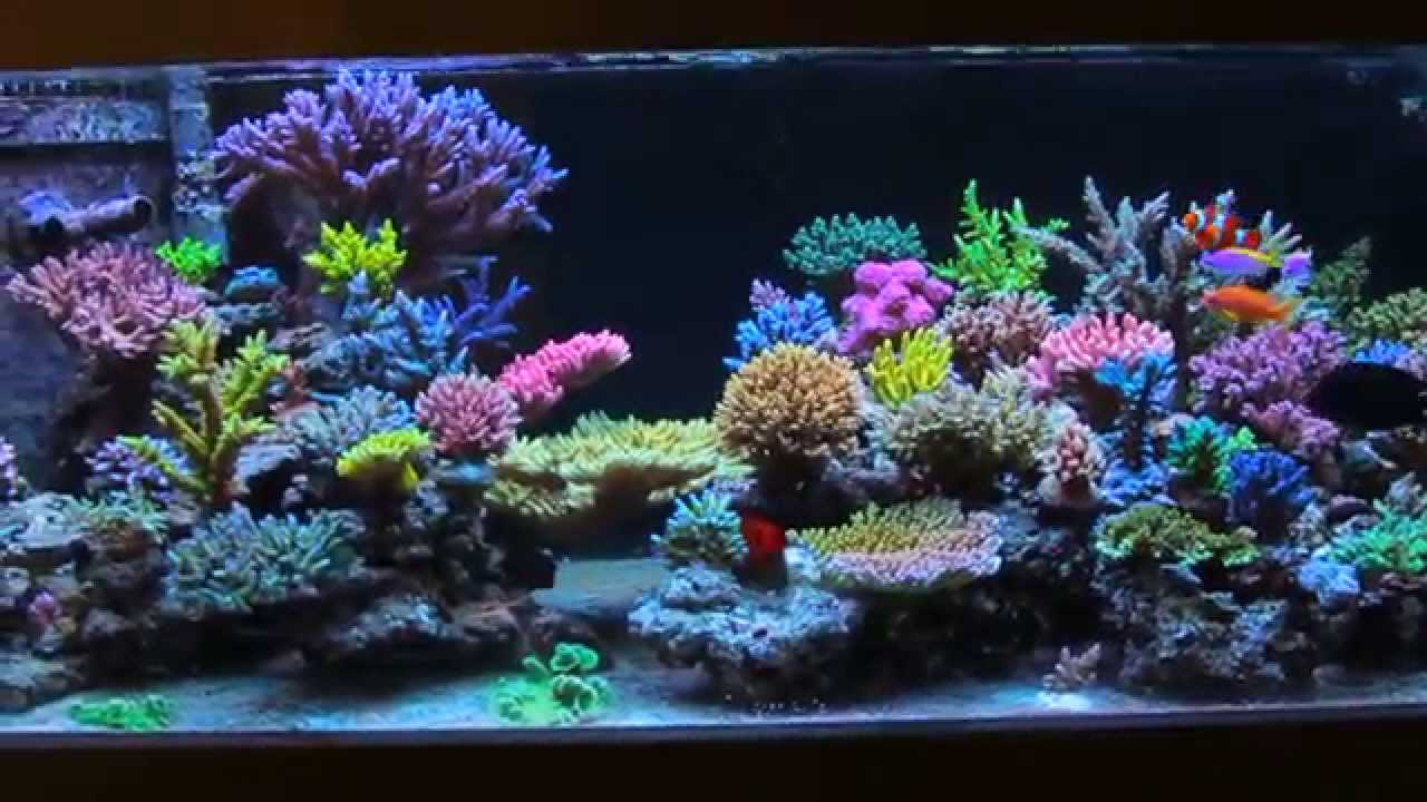 Krzysztof Tryc S Reef Tank After 3 Months With All In One Biopellets Youtube