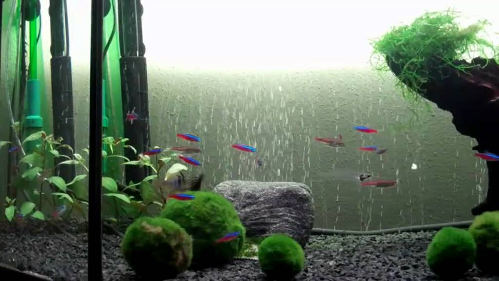 Mooskugeln youtube for Boden aquarium