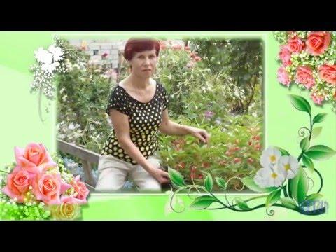 Многолетние садовые цветы фото и описание Энциклопедия