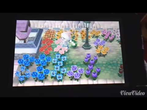 animal crossing new leaf blaue rosen z chten youtube. Black Bedroom Furniture Sets. Home Design Ideas