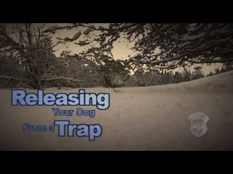 Releasing Your Dog From A Trap