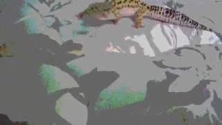 Gecko Remix  !!!!!!