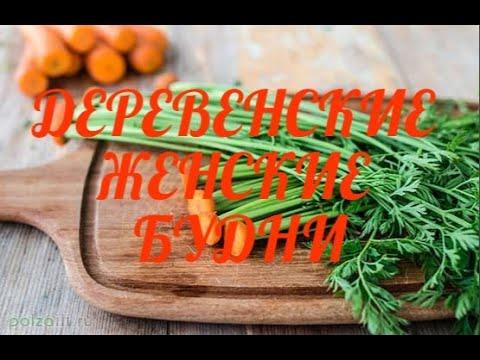 Полезные и целебные свойства морковной ботвы ~ Рецепты лечения ботвой моркови для записи.
