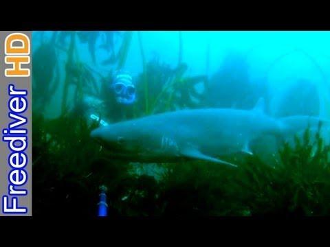Searching for sharks - Freediving False Bay