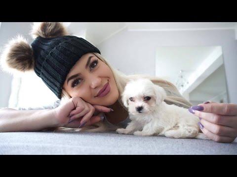 Dobila sam psa ,Mini Maltezer -Tiara plus Novogodišnji pokloni ❤ SabrinaTubic