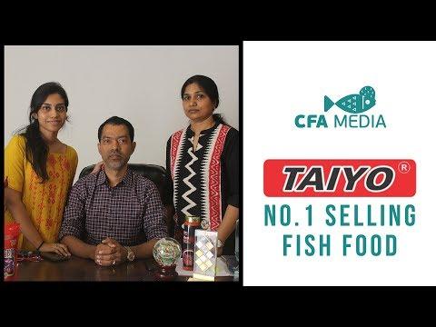 Taiyo - India's No.1 selling fish food | success story | Kolathur Fish Market & Pet Market | #8