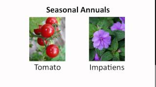 Botany: Plant Classification and Names