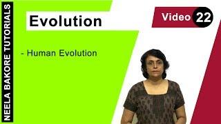 Evolution - Human Evolution