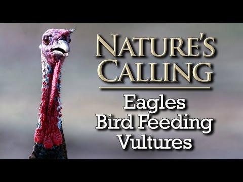 Nature's Calling - Eagles, Bird Feeding, and Vultures (Jan 2016)