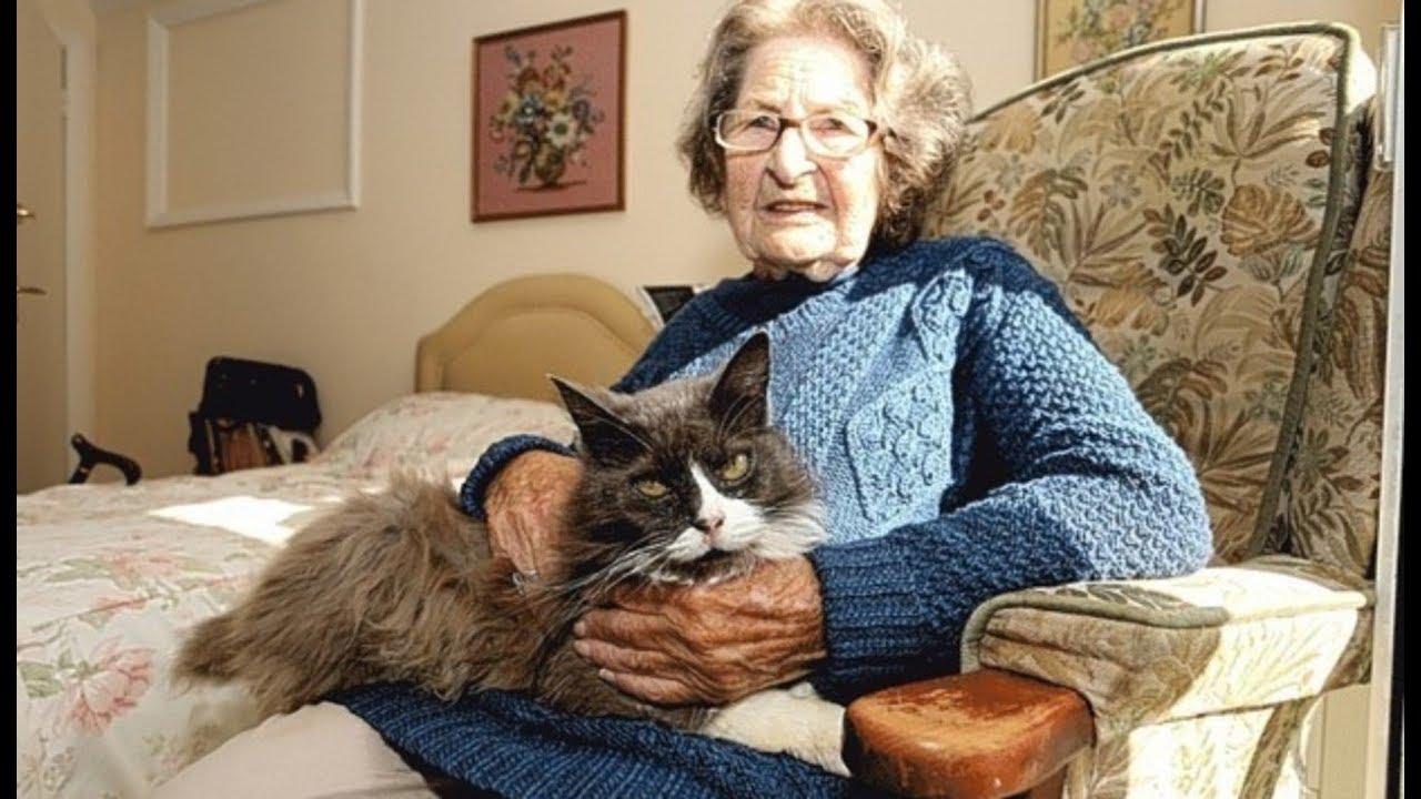Бабушка и кот фото