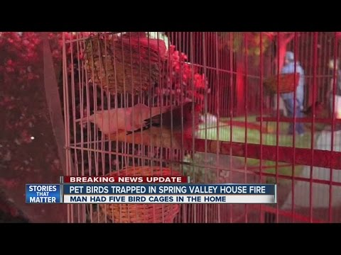 Pet birds trapped in Spring Valley house fire