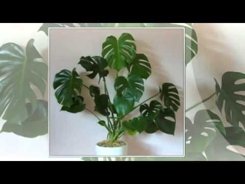 Вредные для домашних животных комнатные растения