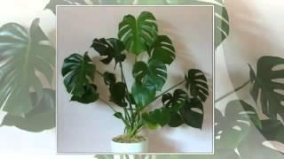 видео Ядовитые растения для кошек и опасные комнатные цветы