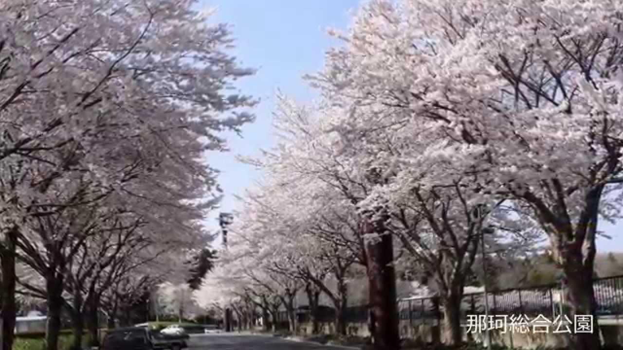 那珂市の桜めぐり - YouTube