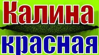 Песня Калина красная русская народная песня русские народные песни клипы