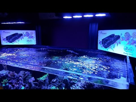 super sps flow new dual maxspect gyres xf250 youtube