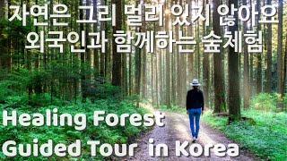 서울 근교 외국인과 함께하는 힐링 숲 체험/숲 탐구/해…
