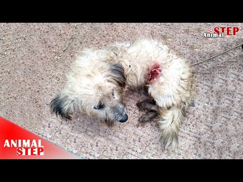 Rescue a Homeless Dog Who Was So Much Suffered