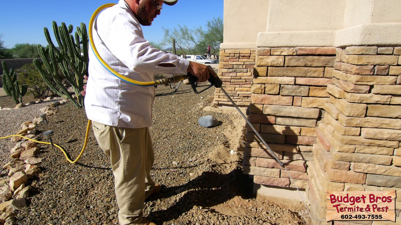 Termite Elimination - Budget Brothers Termite