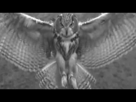 Owl. Totem, Messenger And Guide